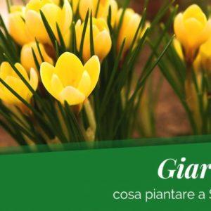 Settembre, i fiori da piantare nel tuo giardino