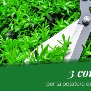 Come potare le piante: 3 dritte per farlo nel modo giusto