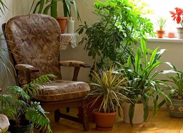 piante-da-interno-pollice-verde
