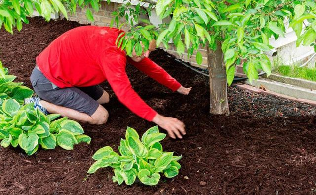 pacciamatura per proteggere piante dal freddo in inverno