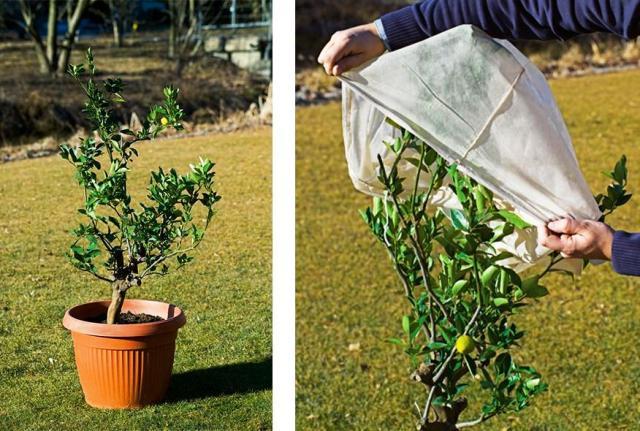 coprire le piante in inverno pe rproteggerle dal freddo