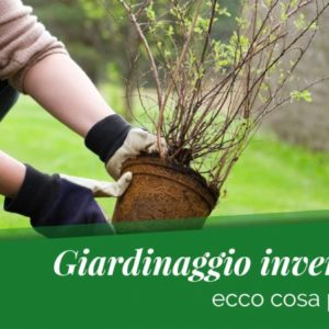 3 consigli di giardinaggio per Gennaio