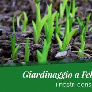 Benvenuto Febbraio! I nostri consigli verdi