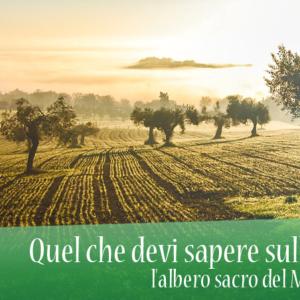 Quel che devi sapere sull'Ulivo, l'albero sacro del Mediterraneo
