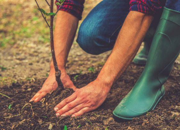 pollice-verde-ragusa-quando-piantare-gli-alberi-da-frutto