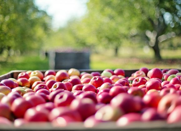 pollice-verde-ragusa-alberi-frutto-melo