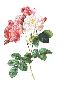 fiori-slide