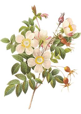 fiori-slide2